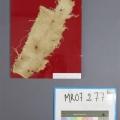 Fragment tissu médiéval en lin
